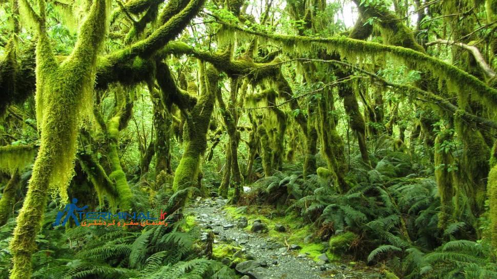 طبیعت زیبای نیوزیلند