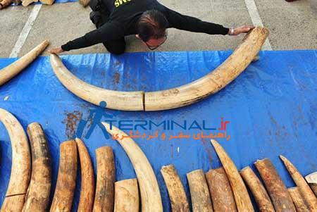 عکسهای جالب, قاچاق عاج فیل ,تصاویر دیدنی