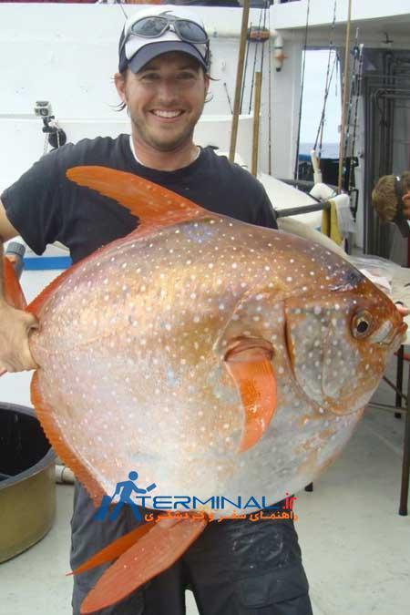 نخستین گونه ماهیهای خونگرم در دنیا کشف شد