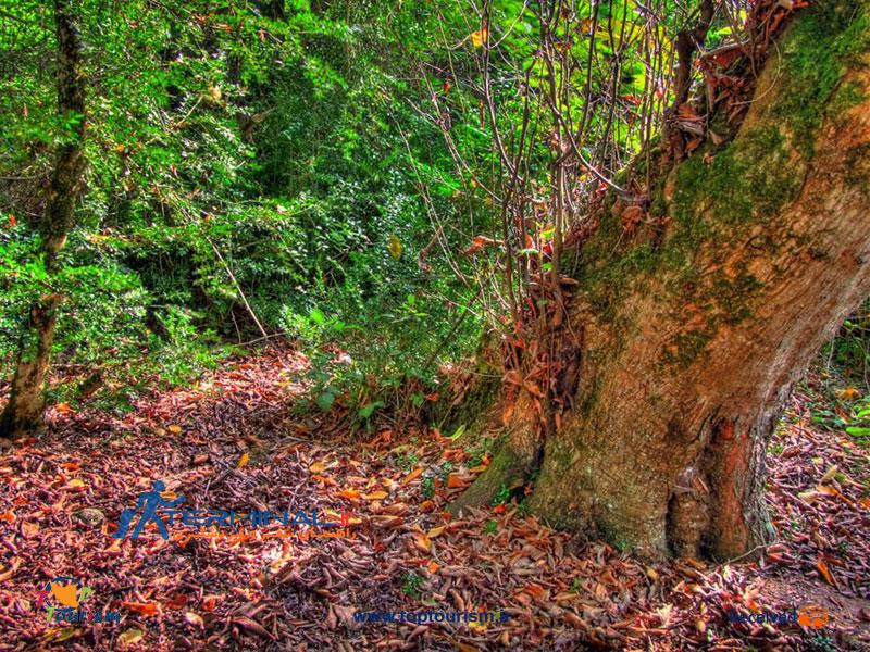 عکس پارك جنگلى سىسنگان