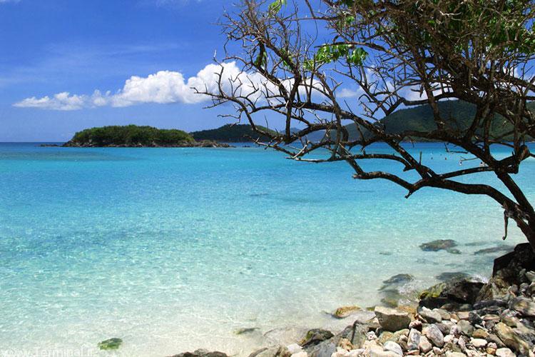 جزیره دارچین در کارائیب